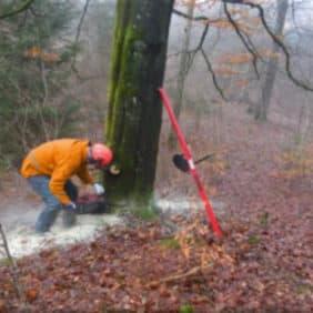 puntal forestal 3