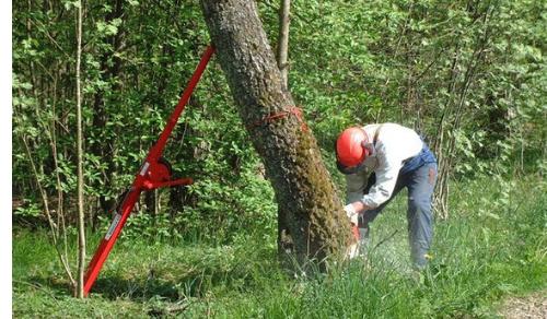 puntal-forestal